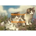 Feline Trio  - #XKD2088  -  PRINT