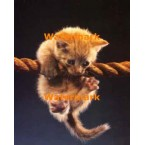 Kitten On A Rope  - #XKLLAM2218  -  PRINT