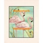 Flamingos  - #XBPP2030  -  PRINT