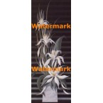 White Flowers  - #XBPP2235  -  PRINT