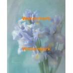 Irises  -  #XAR2703  -  PRINT