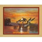 Mallard Sunset  - #XKFL3372  -  PRINT