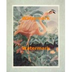 Majestic Flamingos  - #XKFL3814  -  PRINT