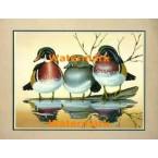 Wood Ducks  - #XKFL3909  -  PRINT