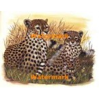 Cheetah Cub with Mother  - #XKL3112  -  PRINT
