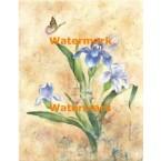 Oriental Iris  - #XKL3121  -  PRINT