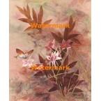 Oriental Wild Flower  - #XKL3327  -  PRINT