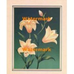 Lilies  -  #XKFL4735  -  PRINT