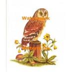 Boreal Owl  - #XKL4132  -  PRINT
