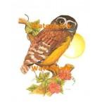 Spectacle Owl  - #XKL4133  -  PRINT