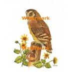 Jamaican Owl  - #XKL4134  -  PRINT