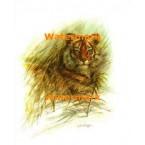 Bold Tiger  - #XKL4666  -  PRINT