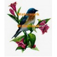 Bluebird  - XD1510  -  PRINT
