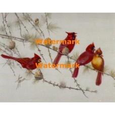 Cardinals  - XBBI-1198  -  PRINT