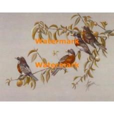 Birds  - XBBI-1201  -  PRINT