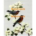 Bluebirds & Dogwood  - XBBI-124  -  PRINT