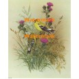 American Goldfinch  - XBBI-152  -  PRINT