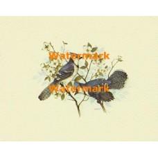 Blue Jays  - XBBI-388  -  PRINT