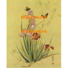 Butterflies & Irises  - XBCH334  -  PRINT