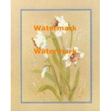 Daffodils  - XBFL1842  -  PRINT