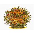 Flowers  - XBFL826  -  PRINT