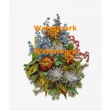 chrysanthemums  - XBFL901  -  PRINT