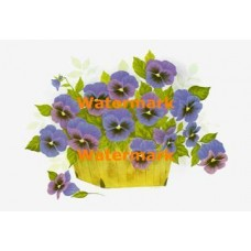 Purple Pansies In Basket  - XBFL958  -  PRINT