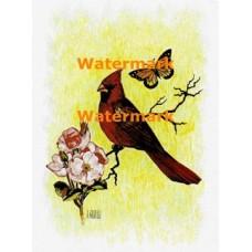 Cardinal & Butterfly  - XKA238  -  PRINT