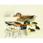 Duck Pond  - XKA3113  -  PRINT