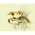 Duck Pond  - XKA3116  -  PRINT
