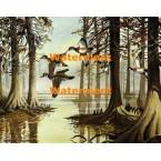 Wood Ducks & Swamp  - XS4547  -  PRINT