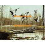 Red Head Ducks  - XS4549  -  PRINT