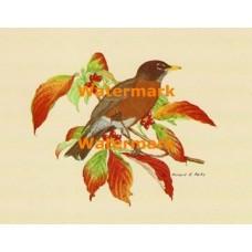 Bird  - XS469  -  PRINT