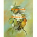 Birds & Flowers  - XS6998  -  PRINT