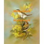 Birds & Flowers  - XS6999  -  PRINT