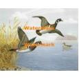 Wood Ducks  - XS9161  -  PRINT