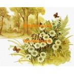 Flowers in Field  - XBSC1726  -  PRINT