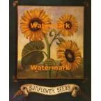 Sunflower Seeds  - #XAR5950  -  PRINT
