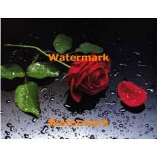 1.  Roses In The Rain  - #XKL5345  -  PRINT