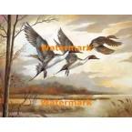 Ducks  - #XD50174  -  PRINT
