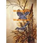 Blue Jays  - #XD50271  -  PRINT