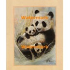Panda Family  - #XD50605  -  PRINT