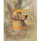 Golden Retriever  - #XD50650  -  PRINT