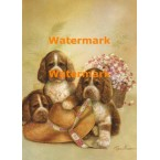 Springer Spaniel Puppies  - #XD50825  -  PRINT