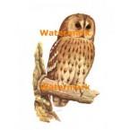 Owl  - #XD6968  -  PRINT