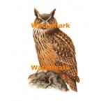 Owl  - #XD6971  -  PRINT