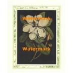 Magnolia Blossom I  - #XAR6625  -  PRINT
