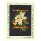 Magnolia Blossom II  - #XAR6627  -  PRINT