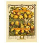 Twelve Months of Fruits:  January 1732  - #XKFL6013  -  PRINT