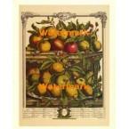 Twelve Months of Fruits:  April 1732  - #XKFL6016  -  PRINT